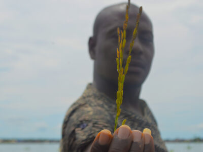 Aquaculture & Agriculture, piloting twin alternatives to the Artisanal Oil Industry  in Bayelsa State.