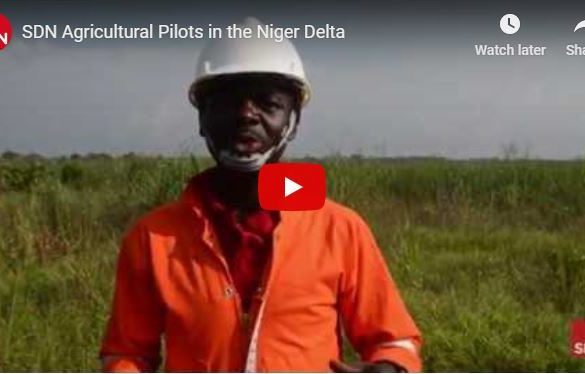 Rice growing agricultural pilot