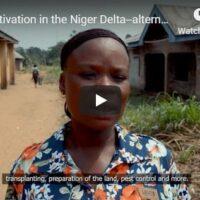 Rice cultivation - alternative livelihoods in the Niger Delta