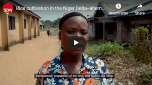 Rice cultivation - alternative livelihoods in the Niger Delta